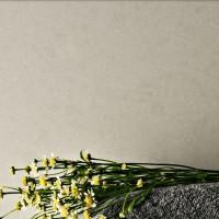Caesarstone - Organic White